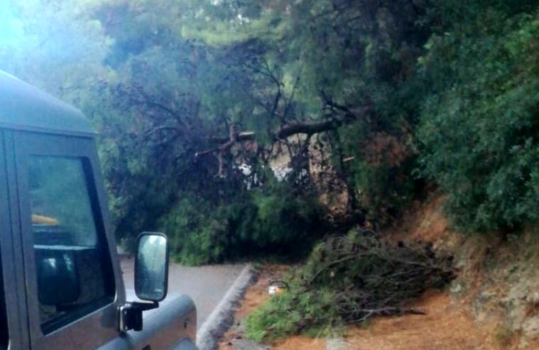 albero caduto vieste-2