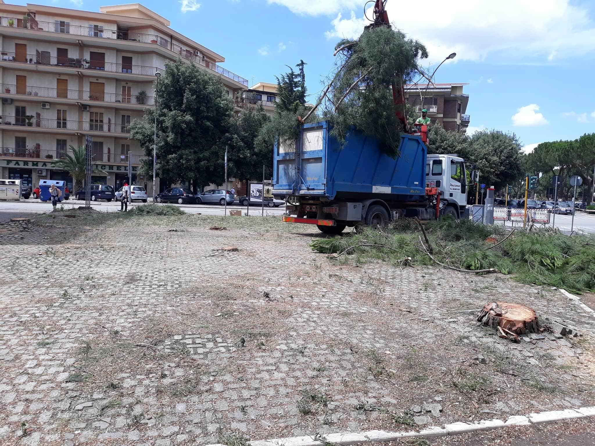 Abbattimento alberi-2