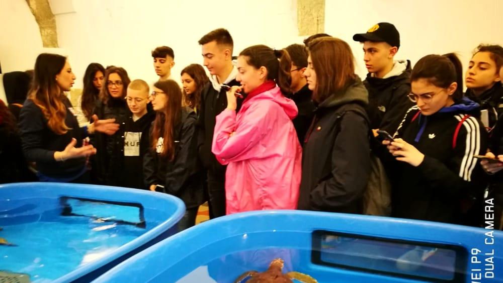 Un mare di risorse_ Liceo Marconi_tartarughe-2