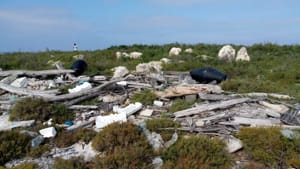 Isole Tremiti_Rifiuti Pinosa-2
