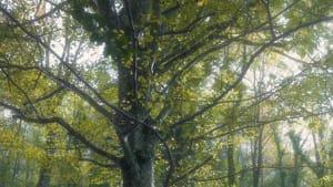Gargano Natour_Foresta Umbra (5)-2