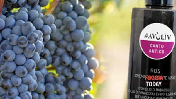 canto antico, la voce del vitigno di omero diventa musica-2