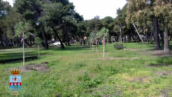 alberipineta03-2