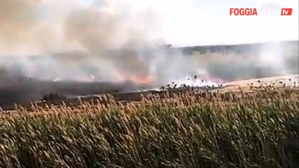 Va a fuoco la 'Riservetta' di Manfredonia: dopo l'incendio persone scappano a bordo di un'auto