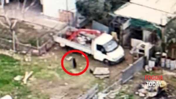 Droni e trappole 'farcite' di carne per stanare la pantera: spunta un altro video, trovata capra sgozzata