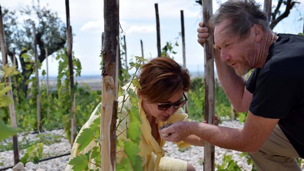 Il metodo della biodinamica per produrre un vino di qualità