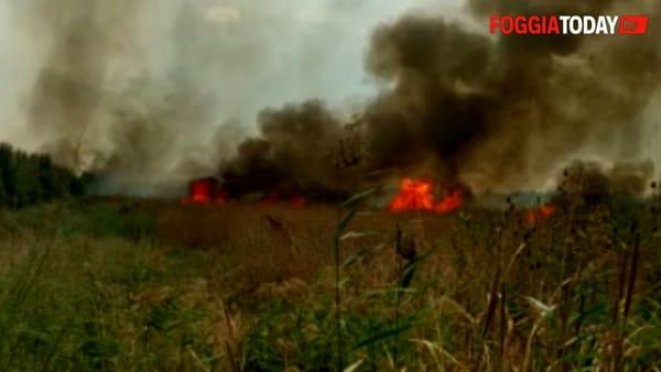 Fiamme nell'Oasi Lago Salso: a fuoco ettari di canneto