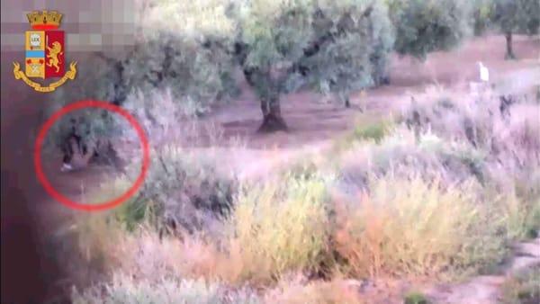 Sorpresa dentro un albero cavo, dal tronco spuntano 400 grammi di eroina: le immagini che incastrano gli arrestati
