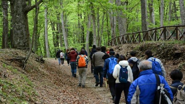 Peregrinazioni  botaniche Foresta Umbra (6)-2