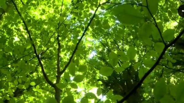 VIDEO | Le 'Faggete' Unesco della Foresta Umbra: un bene naturale raro di cui andar fieri