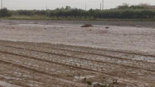 Alluvione Foggia, in arrivo fondi per le aziende ...