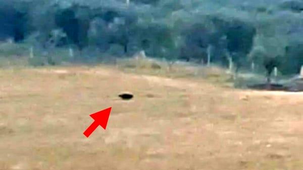 Avvistata la pantera a San Severo: ecco le immagini video