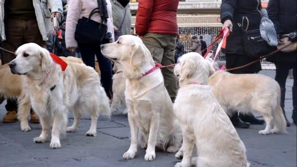 Foggia accoglie il raduno dei Golden Retriever: passeggiata di Natale per le vie della città
