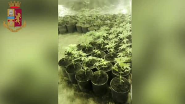 Polizia 'mangia la foglia' e scopre una serra di marijuana allestita nel deposito: scatta il blitz, arrestato 43enne