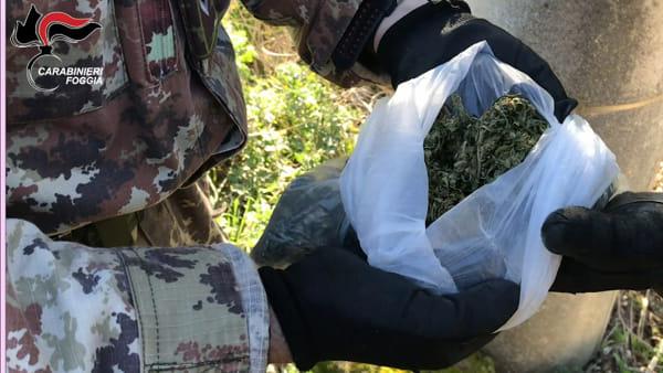 Carabinieri stanano pericoloso trafficante di droga, era ricercato da un mese: le immagini del blitz
