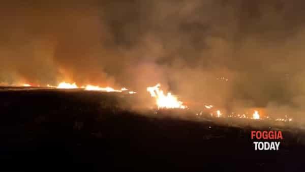 """Choc nel Foggiano: incendiati e distrutti decine di ettari di grano. """"C'è la mano della criminalità organizzata"""""""