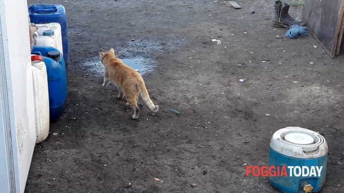 Il 'Ghetto dei Bulgari' di Foggia: il reportage fotografico 0